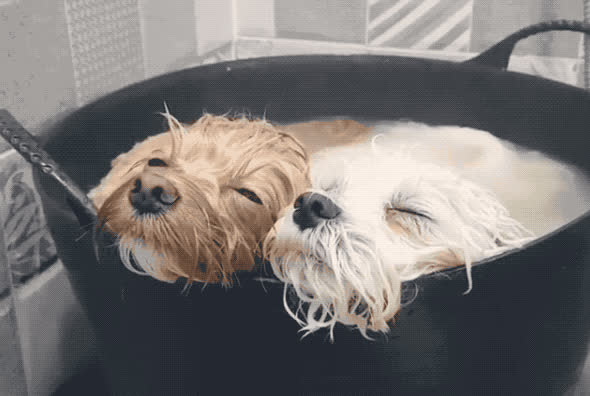 aw, aww, awww, bath, chilax, chill, cute, dog, doggy, have, having, hot, pet, puppies, puppy, relax, sleep, sleepy, sweet, together, Cute puppies GIFs