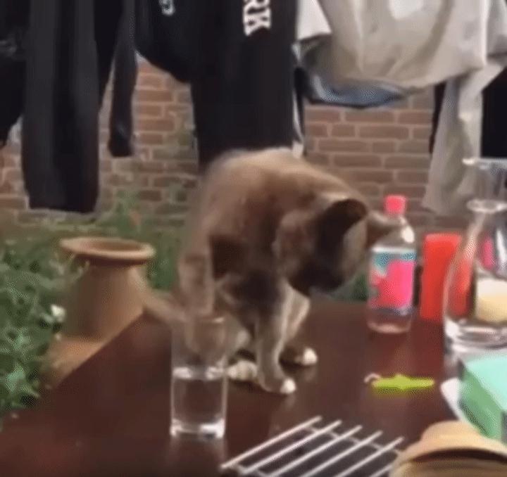 catgifs, Silly cat GIFs