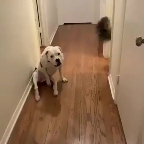 Watch and share Dog GIFs by mayaxs on Gfycat