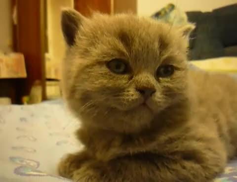 Watch Sleepy GIF on Gfycat. Discover more asleep, cat, falls, kitten, sleepy, suddenly GIFs on Gfycat