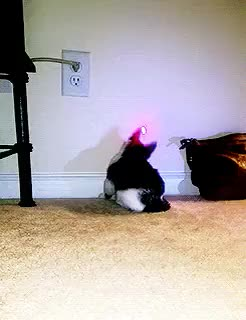 Watch dd and the laser pointer (`) GIF on Gfycat. Discover more GfycatBot, animals, gifs GIFs on Gfycat