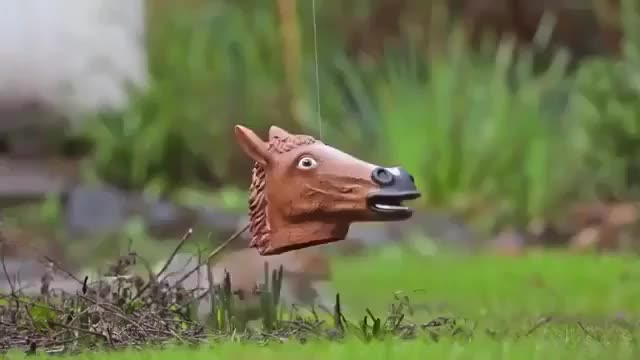 Watch and share Squirrel GIFs and Horse GIFs by notmyproblem on Gfycat