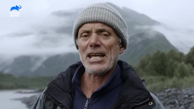 Watch and share Jeremy Wade Tv Show GIFs and Animal Planet Us GIFs by Cindy Bustillos on Gfycat
