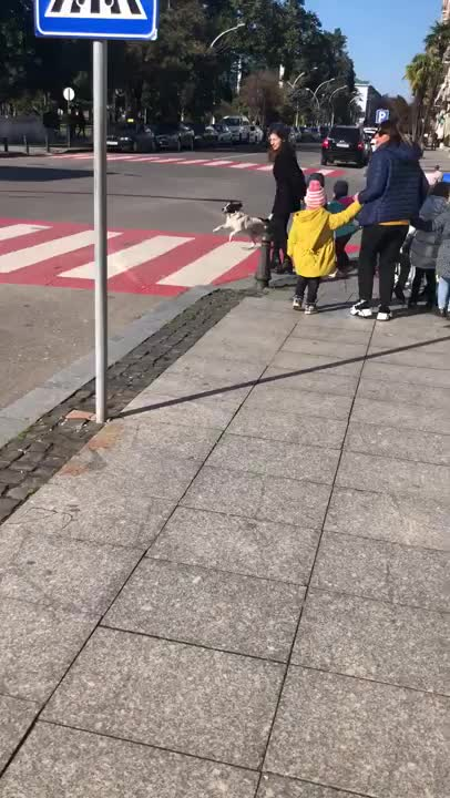 Watch and share Crossing Guard Dog GIFs on Gfycat