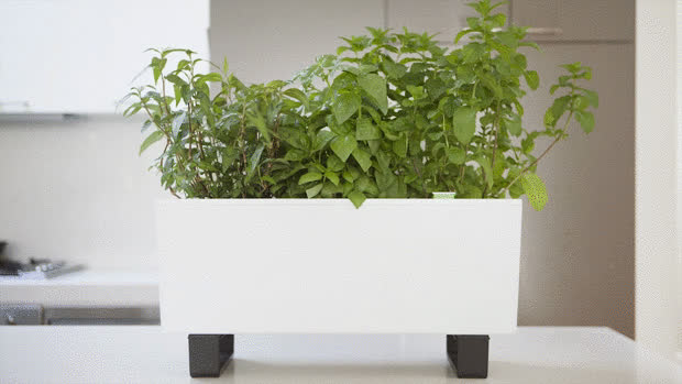 The Glowpear Mini Self Watering Planter Indiegogo Gif Find Make