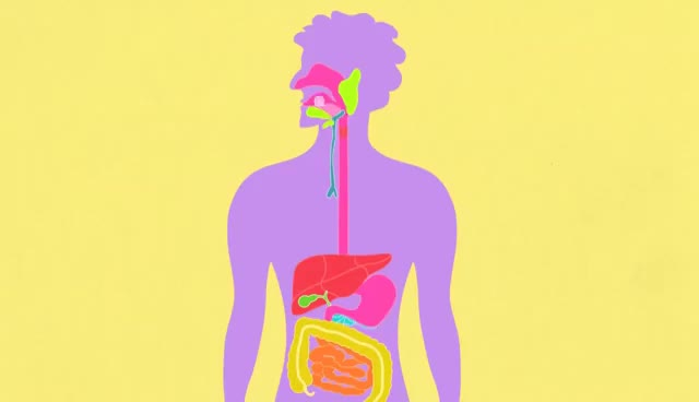 Watch and share The Digestive System: CrashCourse Biology #28 GIFs on Gfycat