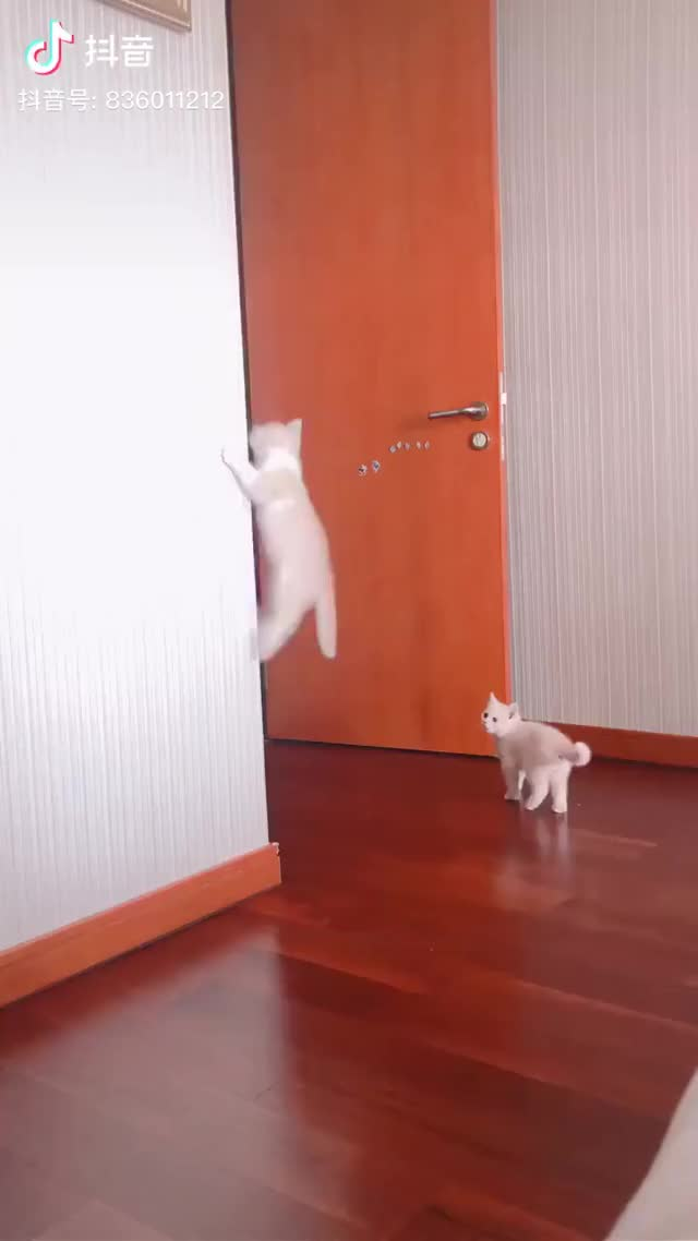 Watch and share Kittens GIFs and Cats GIFs by nitori on Gfycat