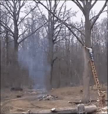 Watch and share I Have To Cut Some Trees Down In My Backyard  Soon BUT I'll Skip It, Lol.  GIFs on Gfycat