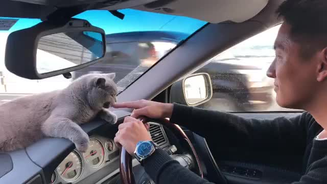 Dashboard buddy GIFs