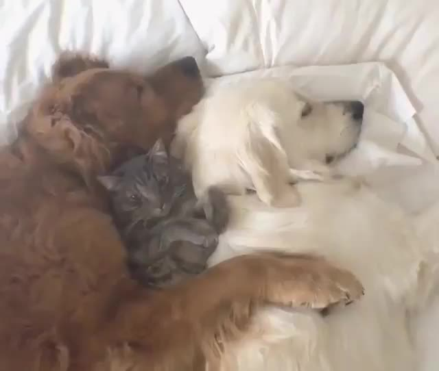 Best friends nap together GIFs