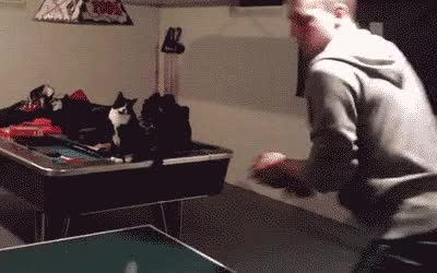 Watch and share Fist Bump GIFs and Ping Pong GIFs by Reactions on Gfycat