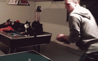 cat, fist bump, ping pong, Cat Fist Bump GIFs