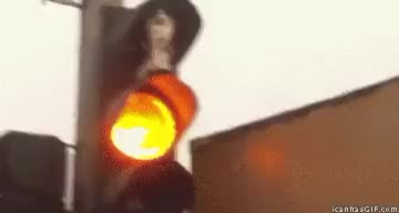 Watch roller GIF on Gfycat. Discover more related GIFs on Gfycat