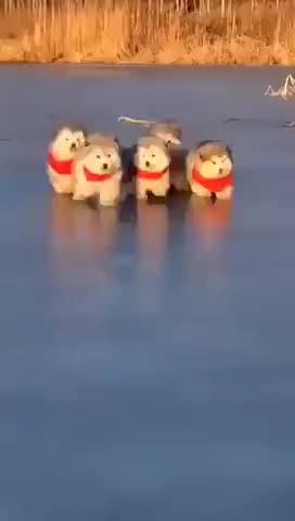 Cutest thing you see today gif