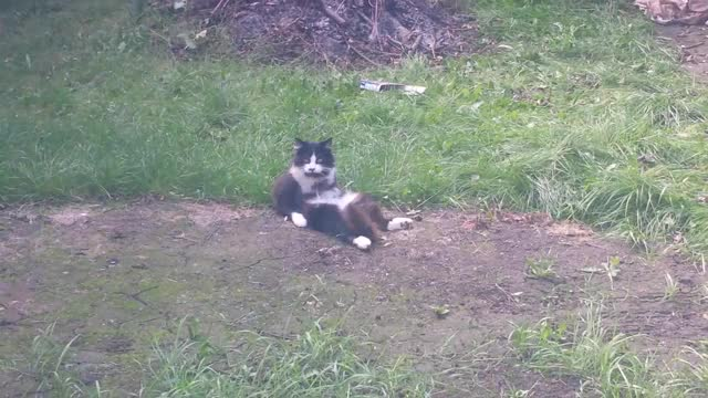 Watch My weird Cat GIF by Cat that got the games (@kittycream) on Gfycat. Discover more Casper, cat, floof, fluffy, funny, kitty, sitting, weird GIFs on Gfycat