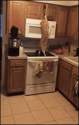 """Watch and share Mission Impurrsible? Nothing, Nobody Can Stop The Hungry """"beast"""". GIFs on Gfycat"""