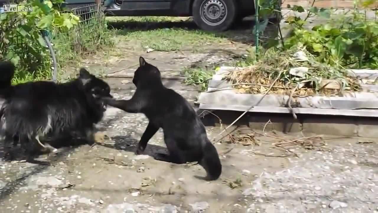 AnimalTextGifs, hitmanimals, Cat v.s. ewe (reddit) GIFs