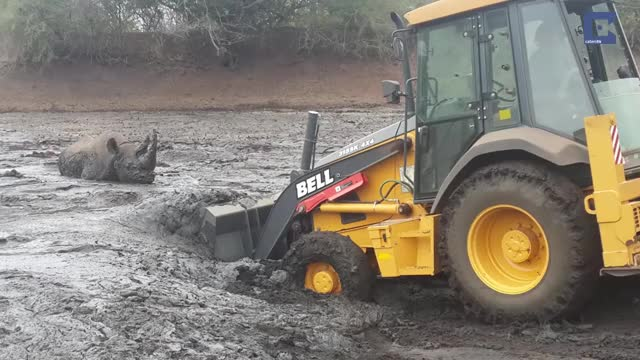 Watch Rhino Stuck In Mud Rescued By Digger long GIF by skydiver on Gfycat. Discover more Africa, Caters Clips, Excavator, Faithinhumanity, Helping, Humansbeingbros, Mademesmile, Mud, Nature, News & Politics, Rhino, Wildlife, catersnewsagency, caterstv GIFs on Gfycat