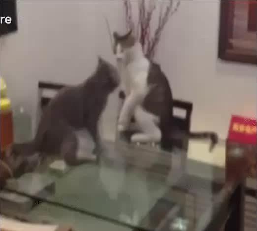 CatPow, hitmanimals, Wrestling Cat GIFs
