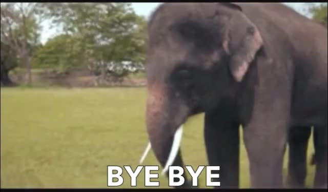 Watch this elephant GIF by GIF Queen (@ioanna) on Gfycat. Discover more animals, bye, cute, day, elephant, funny, goodbye, wave, waving, world, worldelephantday, zoo GIFs on Gfycat