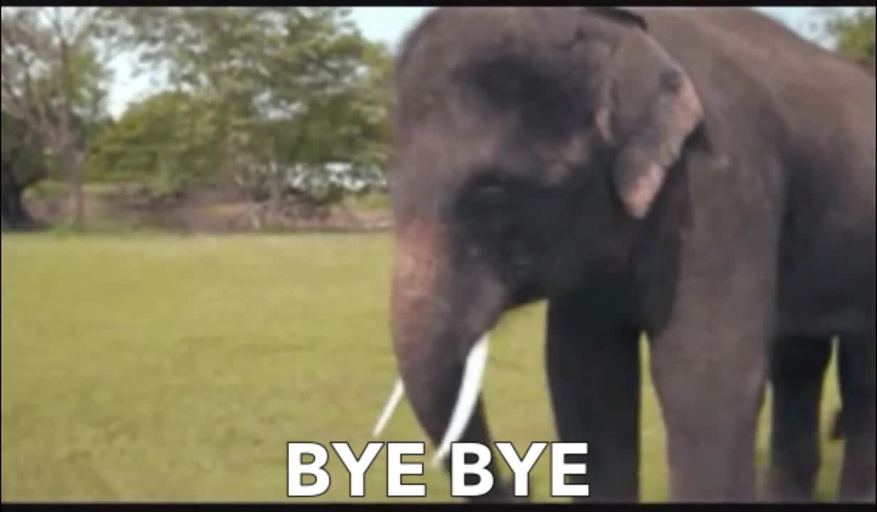 animals, bye, cute, day, elephant, funny, goodbye, wave, waving, world, worldelephantday, zoo, Elephant waving goodbye GIFs