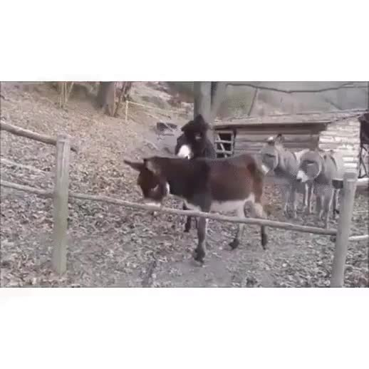 abcadaba, Donkey #3 Figures it Out (X-Post From /r/likeus) GIFs