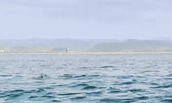 Watch and share Sting Ray GIFs and Flying GIFs by SKEZ520 on Gfycat