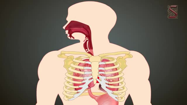 respiratory system and energy