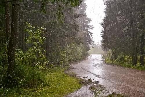 Watch and share Run Rain GIFs on Gfycat