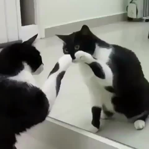 he_hu_must_be_named, This cat's first time seeing through The Matrix GIFs