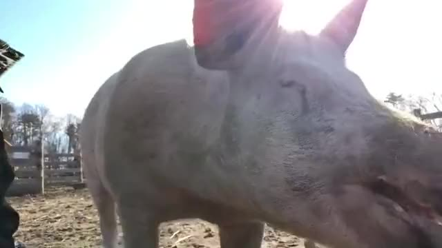 Watch and share Rudythepig GIFs by b12ftw on Gfycat