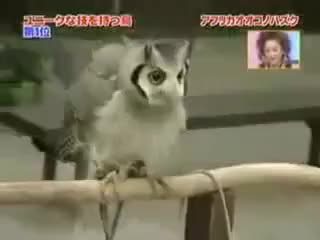 Watch Owl big GIF on Gfycat. Discover more owl GIFs on Gfycat