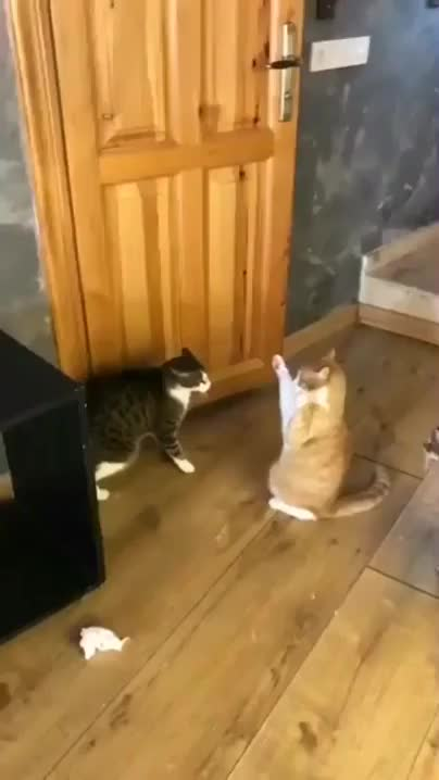 Watch and share Cute And Love GIFs and Catslove GIFs by Mandeep websolution on Gfycat
