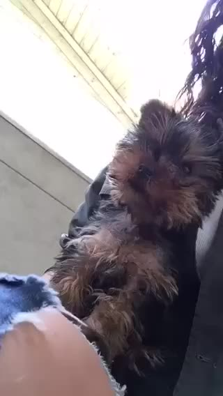 Watch and share Puppy GIFs and Kiss GIFs by jdcgrayson on Gfycat