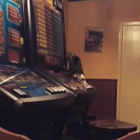 blue 💙, gambling, gambling kitty GIFs