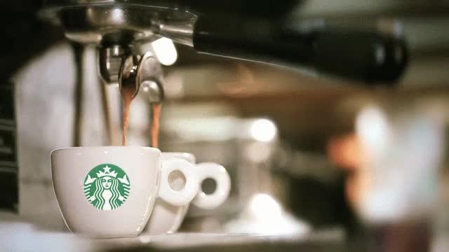 MatureLegitimateBluebottle MatureLegitimateBluebottle MatureLegitimateBluebottle,Zippy latte latte starbi starbi starbucks GIFs (reddit)