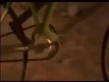 Watch Kermit GIF on Gfycat. Discover more bike, kermit GIFs on Gfycat