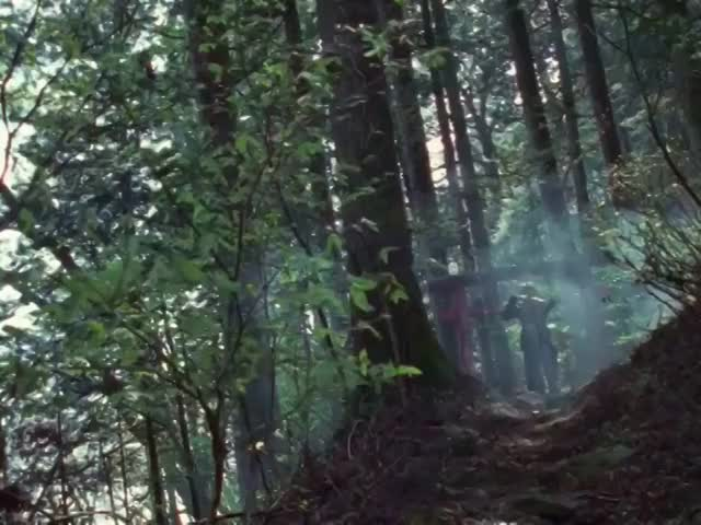 Watch Forest GIF by @cariostar on Gfycat. Discover more related GIFs on Gfycat