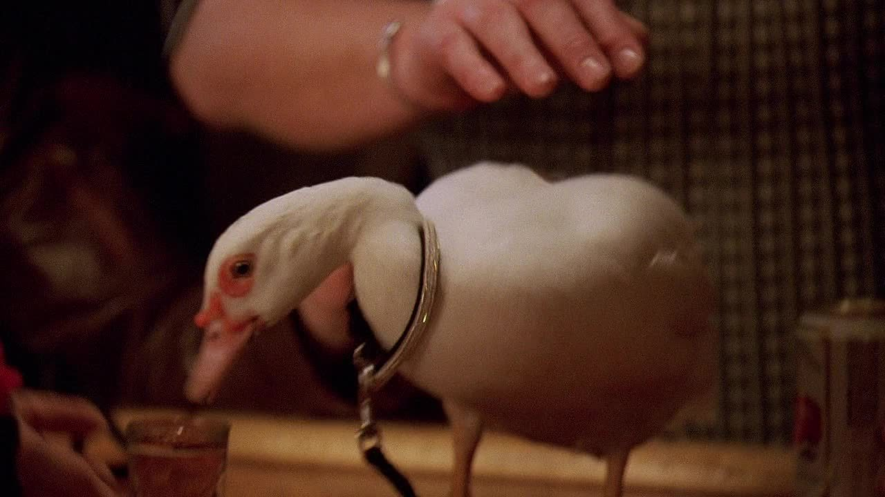 Duck, Funny, TheWire, funny,  GIFs