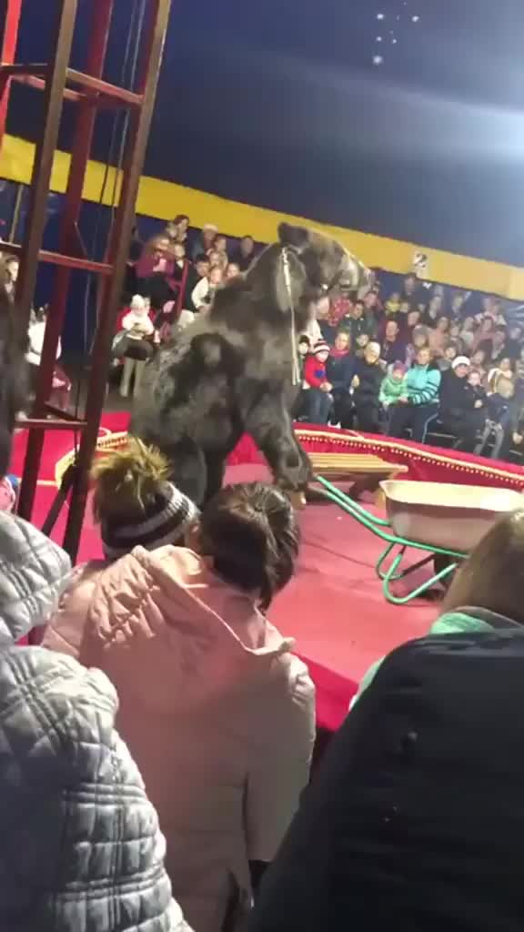 Watch and share Bear Gets Revenge On Circus GIFs by crazyboobs on Gfycat