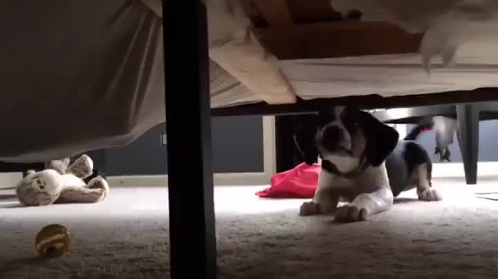 Pupper checking for monsters under the bed GIFs