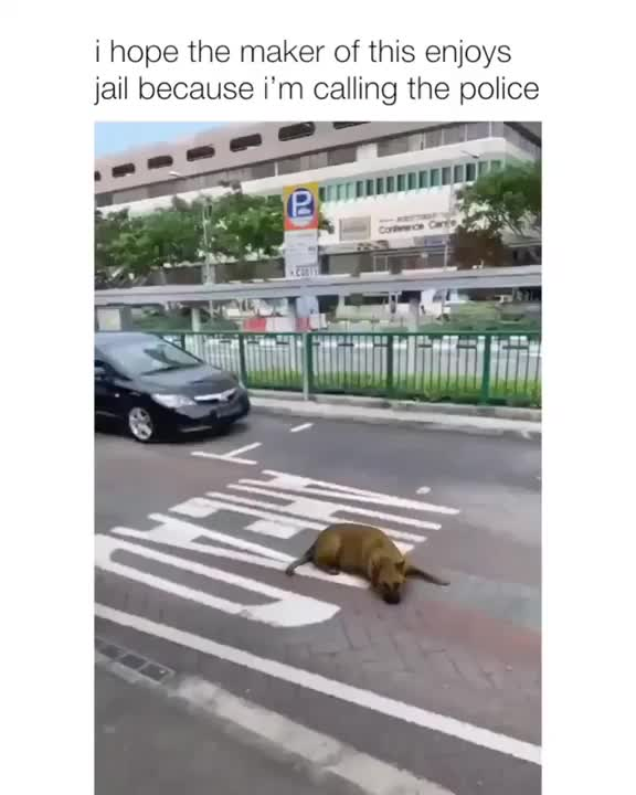 Watch and share PoOr PuPpEr RuThLeSsLy RUn DoWn ON THe StReEt GIFs by fantoculu on Gfycat