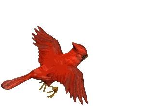 cardinals GIFs