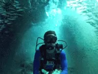 Watch and share Scuba Diving GIFs on Gfycat