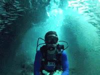 scuba, diving, slide, in, them GIFs