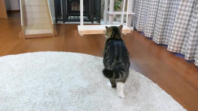 Watch this cat GIF on Gfycat. Discover more Maru, cat, kitty, maru, pets, ねこ, まる, 猫 GIFs on Gfycat