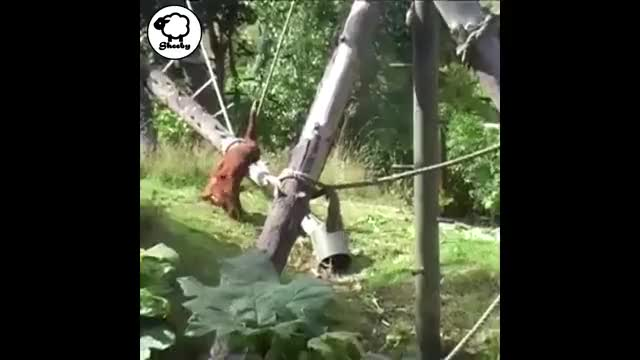 Watch Baby Orangutan Doesn't want to Leave the Playground! GIF on Gfycat. Discover more Baby Orangutan Doesn't want to Leave the Playground!, animal, ape, apes, baby, cute, oerangoetang, orangutan, play, playing GIFs on Gfycat