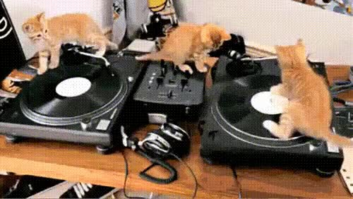 Watch and share Kittens GIFs on Gfycat