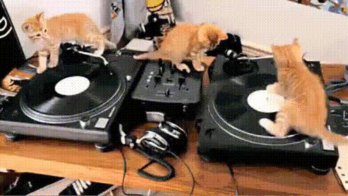 kittens, DJ kittens GIFs