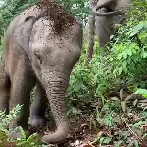 babyelephants, beautiful elephants, beautifulelephants, elephant, elephantlove, elephantrescue, elephants, elephantsofinstagram, regrann, savetheelephants, stoptheivorytrade, wildella, Baby Elephants! 💗🐘❤️ . . . Save the Elephants! - GIFs